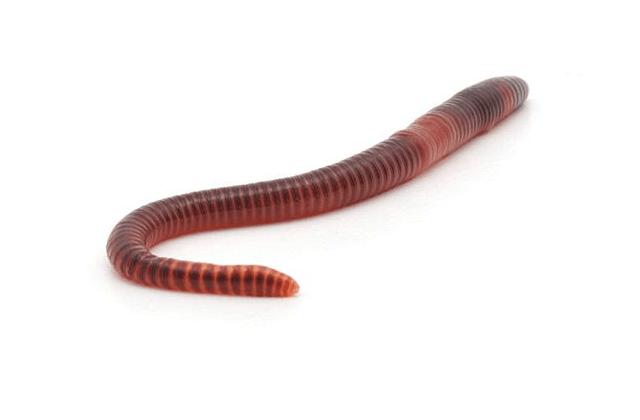 搗破危險挖礦蠕蟲指令伺服器 85萬病毒自我毀滅